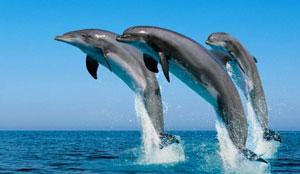 gran canaria delfine schwimmen